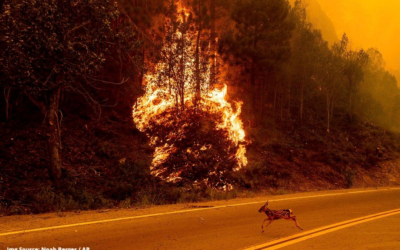 How is Climate Change Central to California's Wildfire?